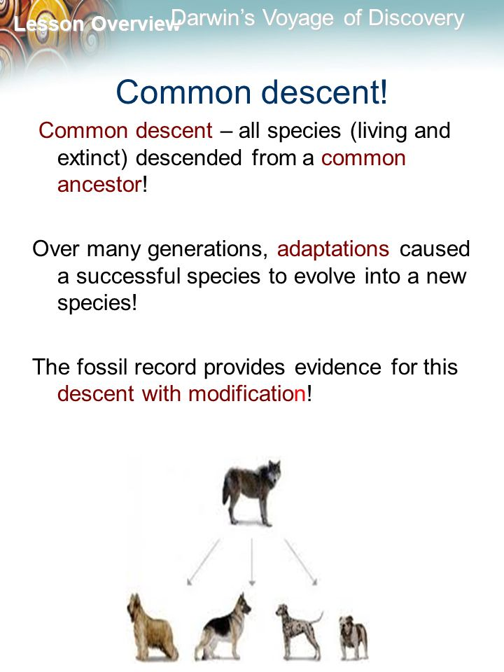 Common descent! Common descent – all species (living and extinct) descended from a common ancestor!