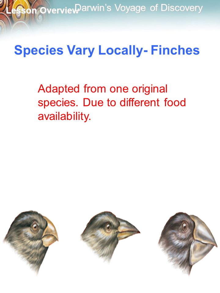 Species Vary Locally- Finches