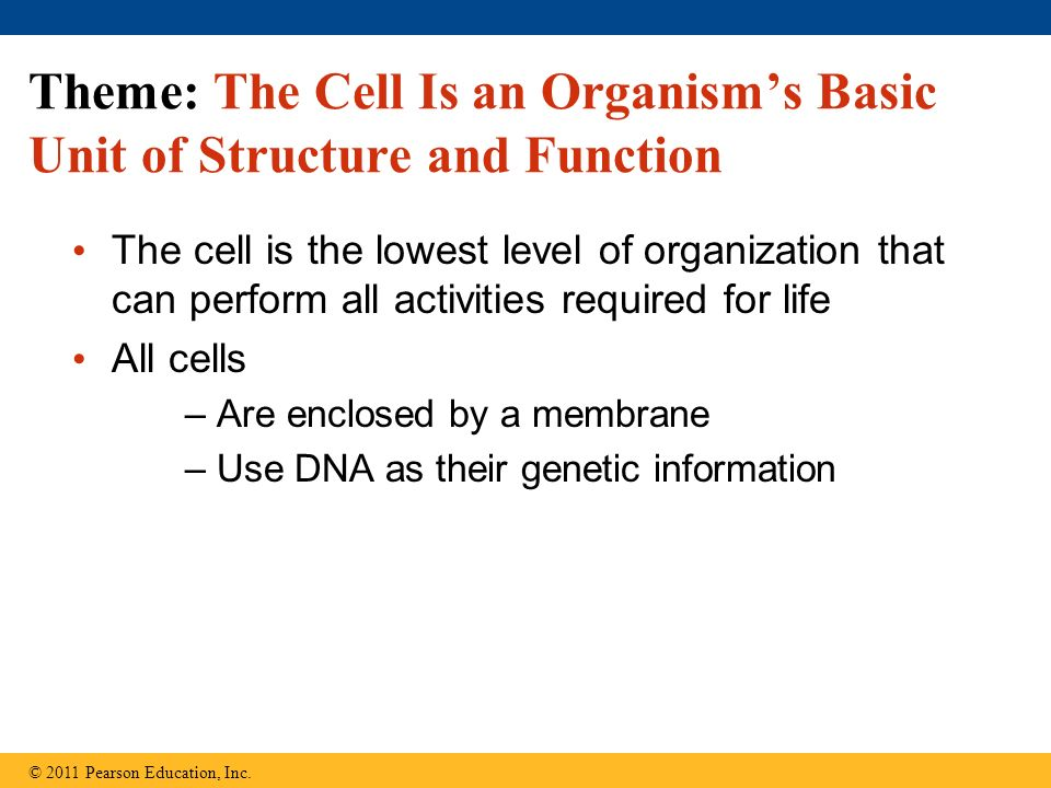 Theme: The Cell Is an Organism's Basic Unit of Structure and Function