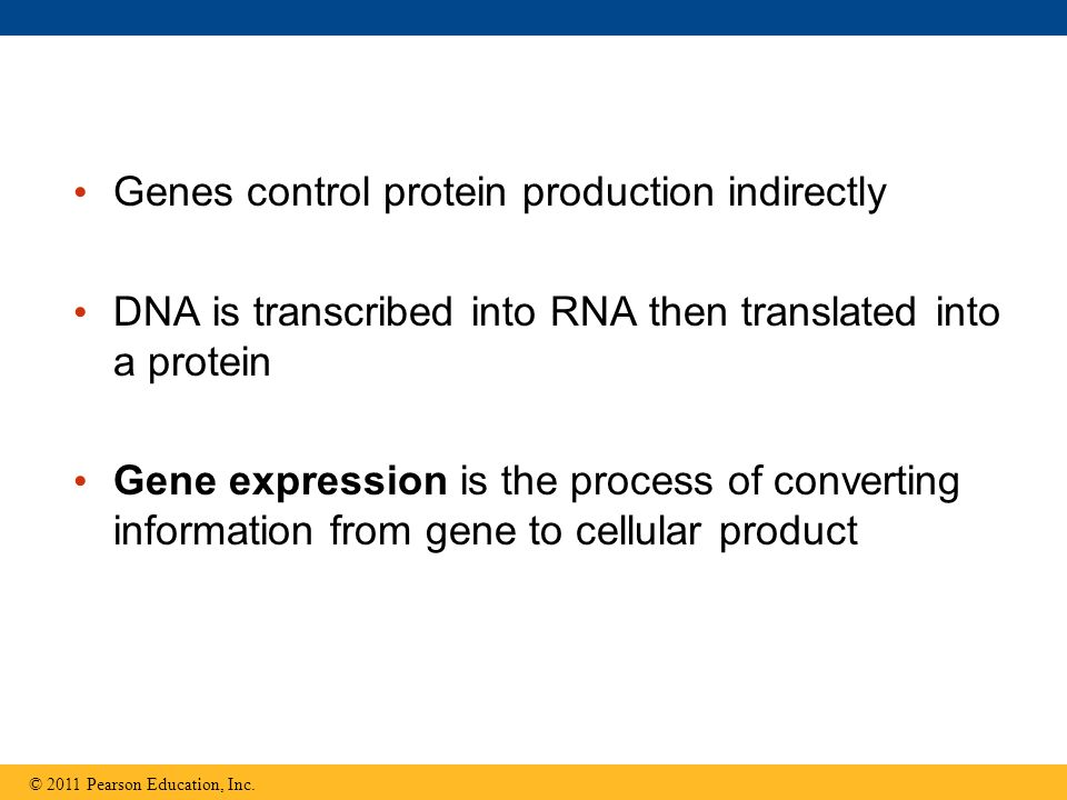 Genes control protein production indirectly