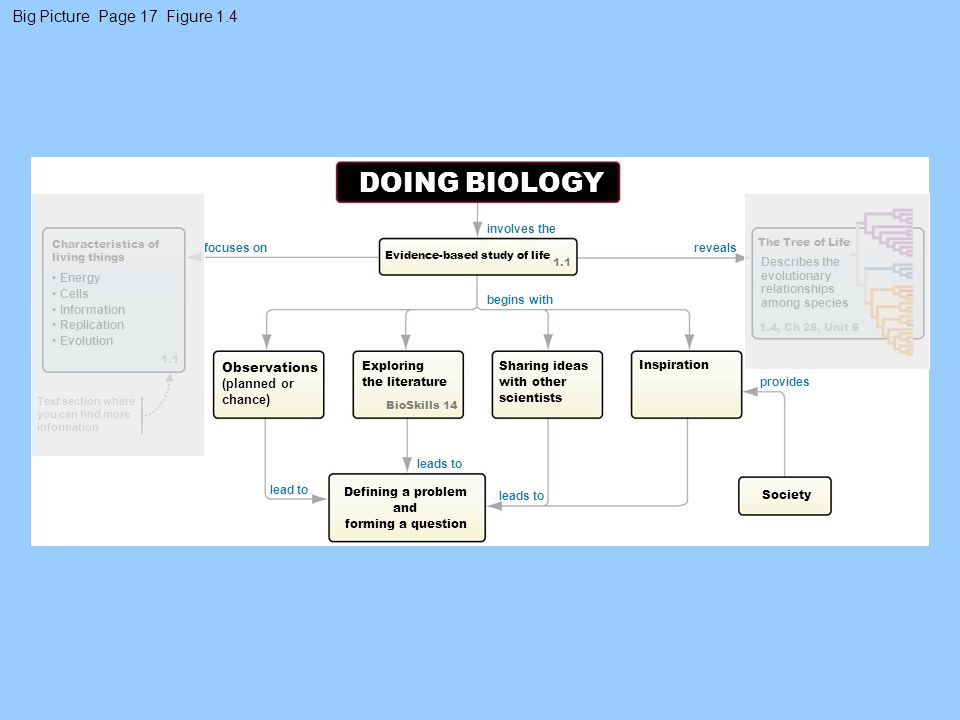 DOING BIOLOGY Big Picture Page 17 Figure 1.4 Observations (planned or