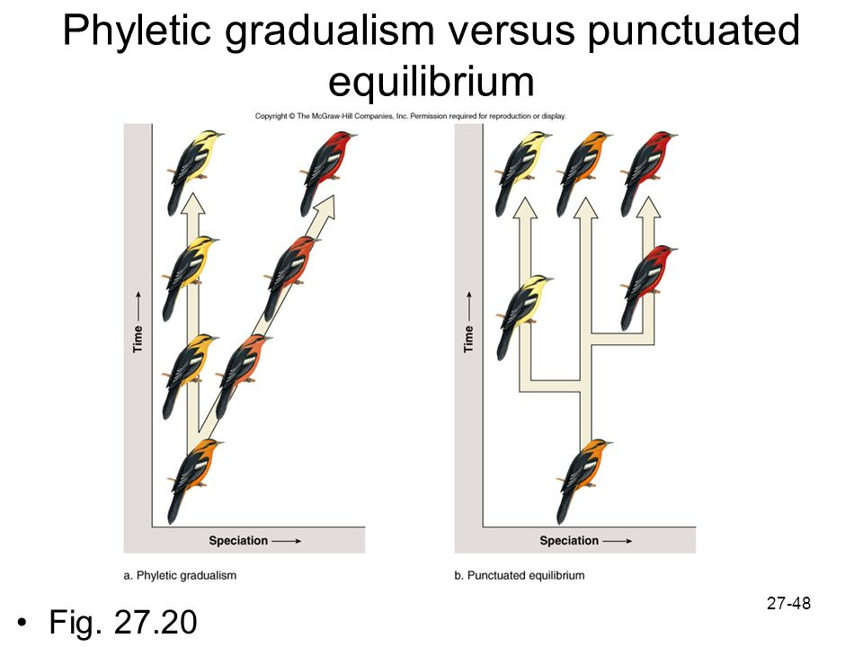 phyletic gradualism Gradualism and punctuated equilibrium are two ways in which the evolution of a species can occur a species can evolve by only one of these, or by both scientists think that species with a.