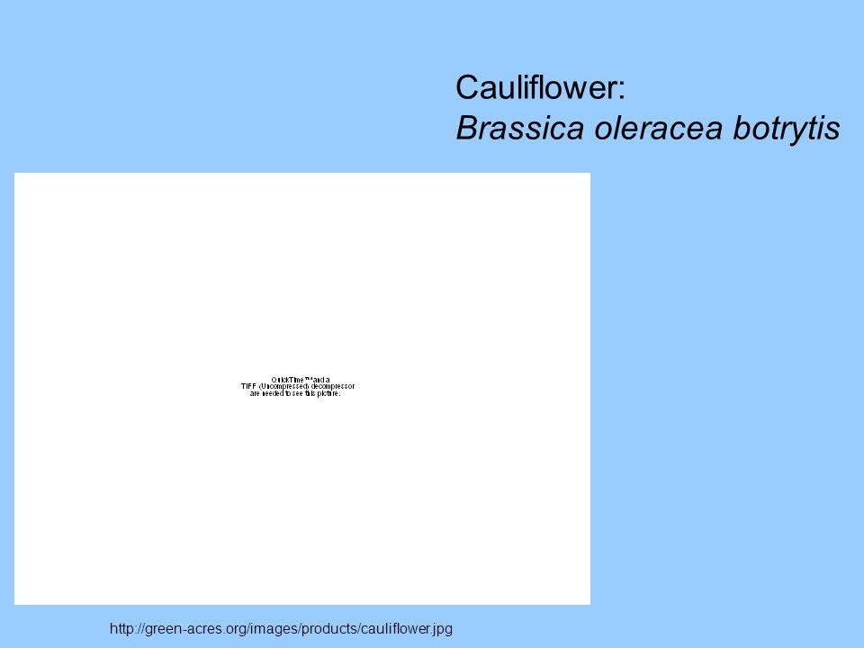 Brassica oleracea botrytis