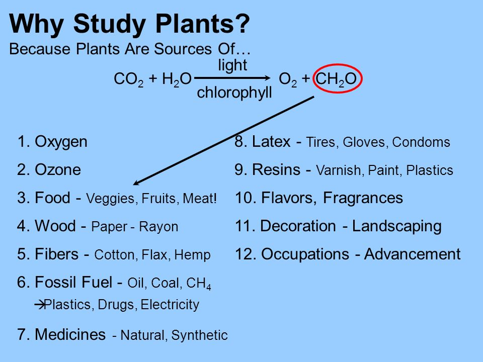 Why Study Plants Because Plants Are Sources Of… CO2 + H2O O2 + CH2O
