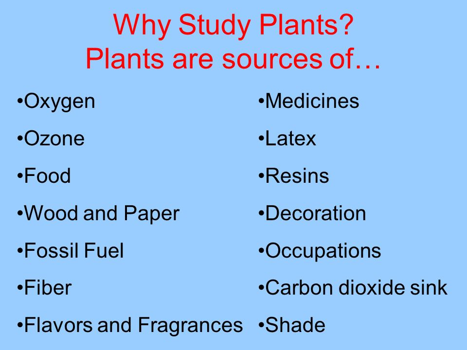 Why Study Plants Plants are sources of…