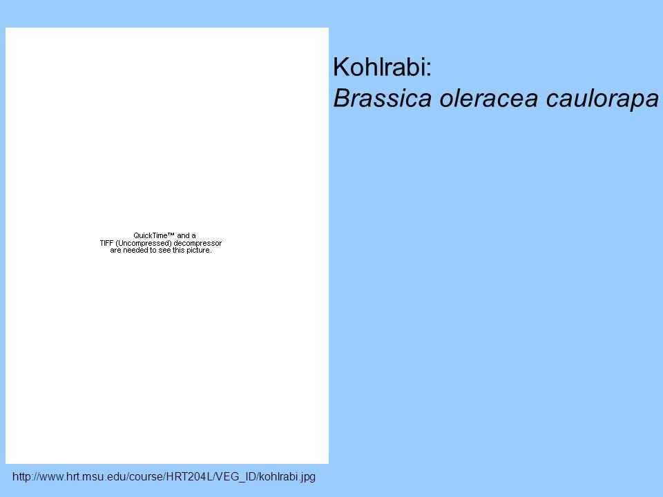 Brassica oleracea caulorapa