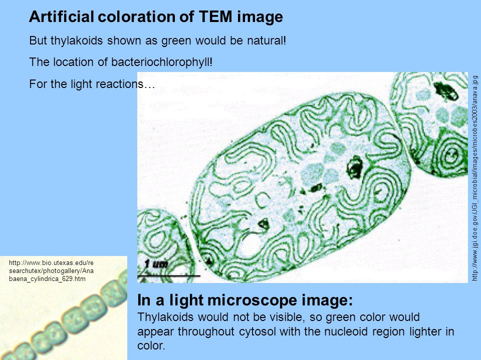 Artificial coloration of TEM image