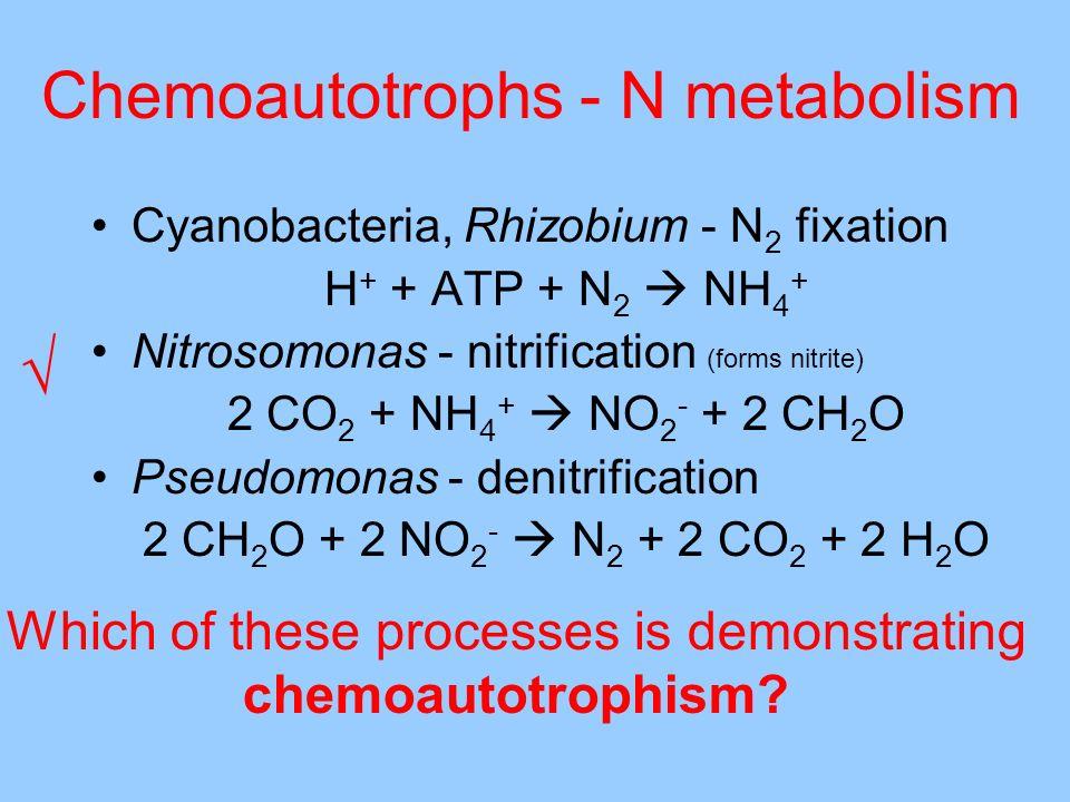 Chemoautotrophs - N metabolism
