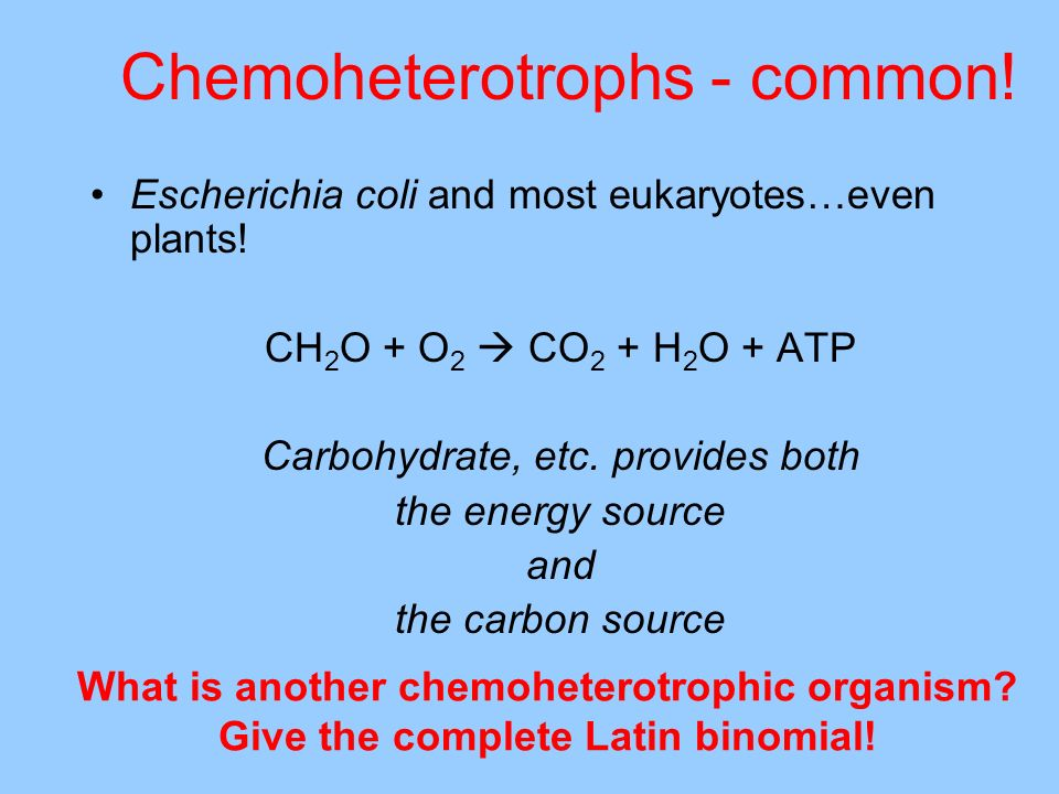 Chemoheterotrophs - common!
