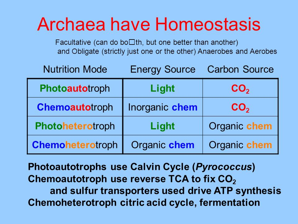 Archaea have Homeostasis