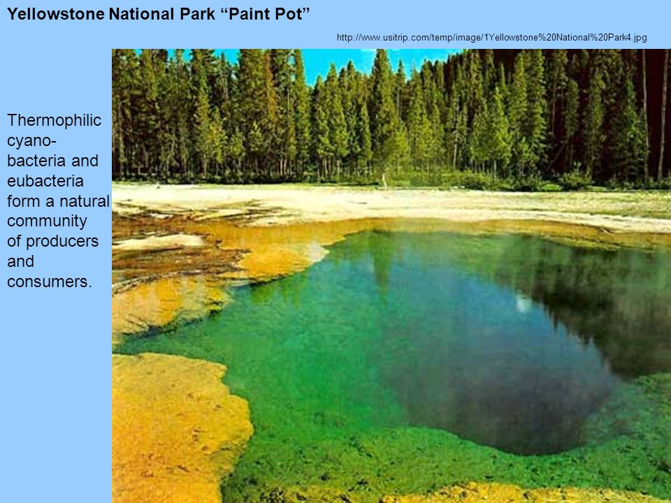 Yellowstone National Park Paint Pot