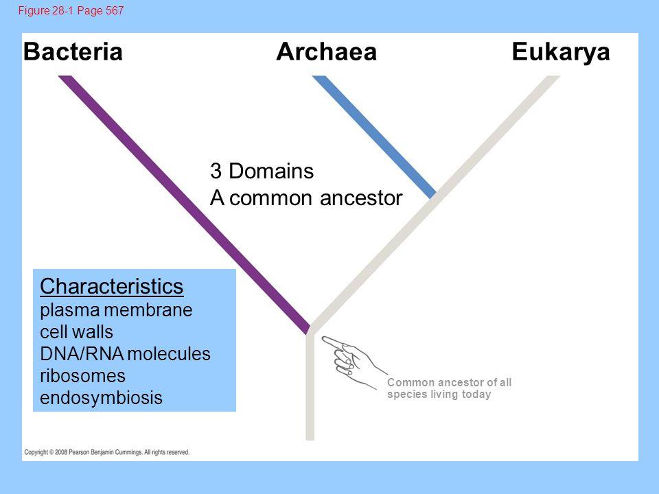 Bacteria Eukarya Archaea 3 Domains A common ancestor Characteristics