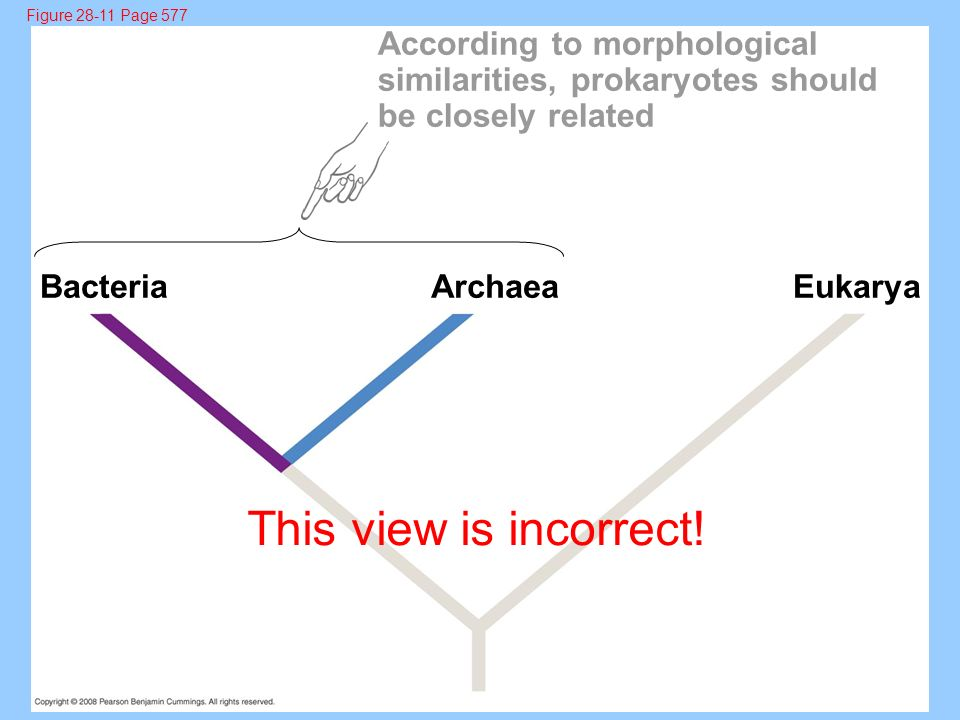 This view is incorrect! According to morphological