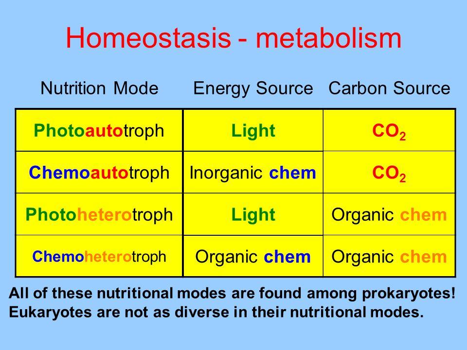 Homeostasis - metabolism