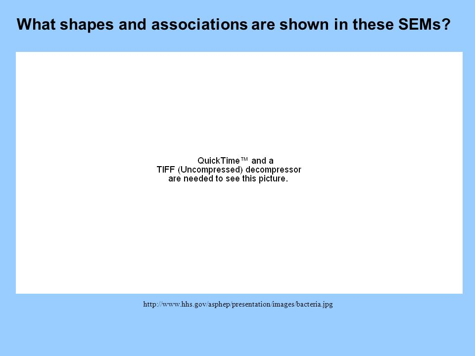 What shapes and associations are shown in these SEMs