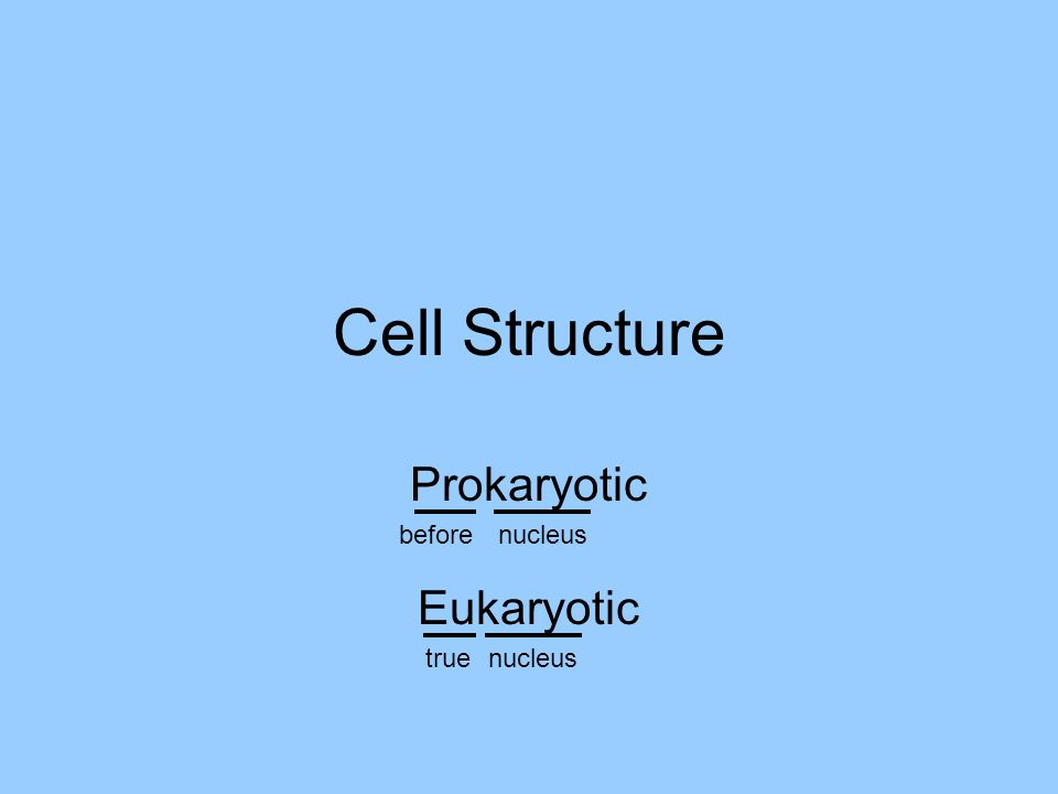 Cell Structure Prokaryotic before nucleus Eukaryotic true nucleus