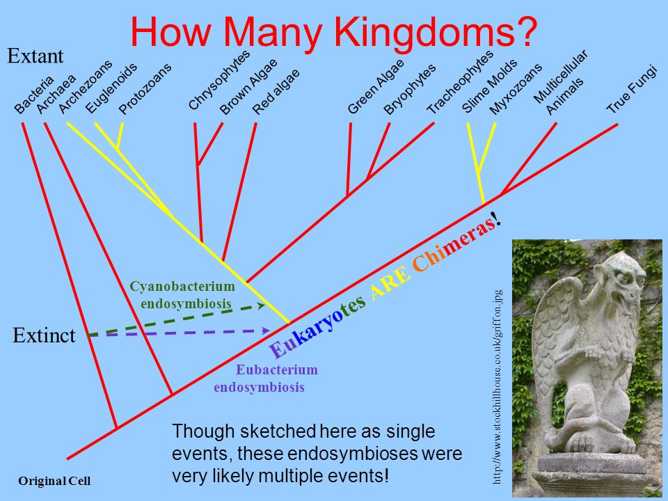 How Many Kingdoms Extant Eukaryotes ARE Chimeras! Extinct