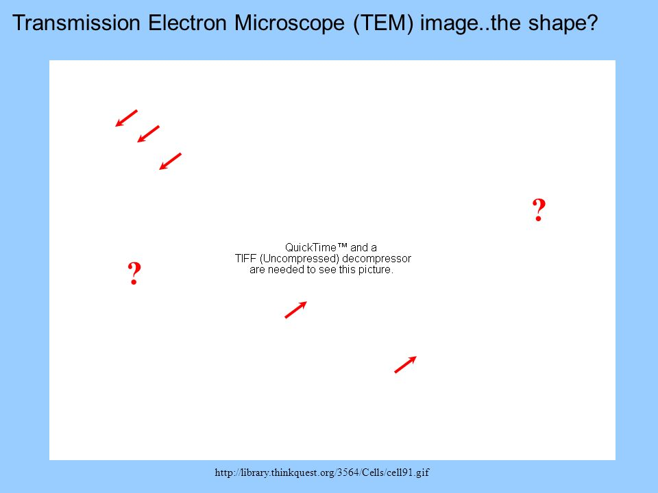 Transmission Electron Microscope (TEM) image..the shape