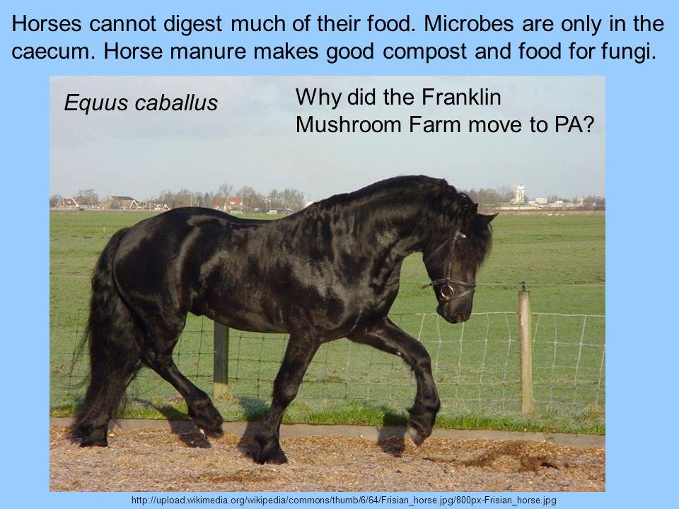 Why did the Franklin Mushroom Farm move to PA Equus caballus