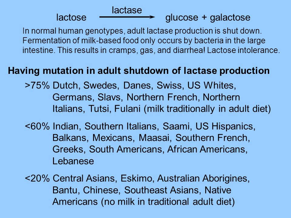 Having mutation in adult shutdown of lactase production