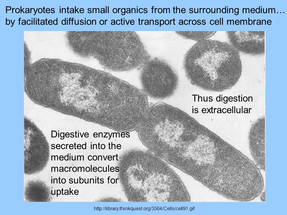 Prokaryotes intake small organics from the surrounding medium…