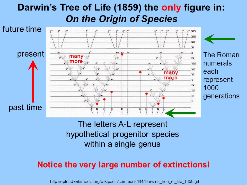 Notice the very large number of extinctions!