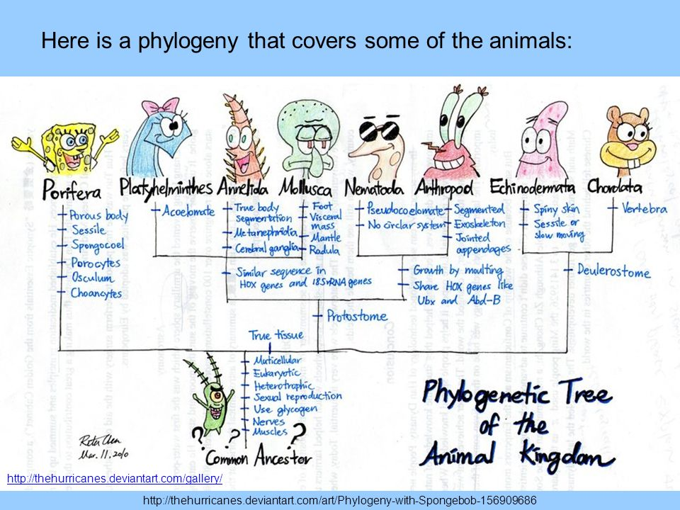 Here is a phylogeny that covers some of the animals: