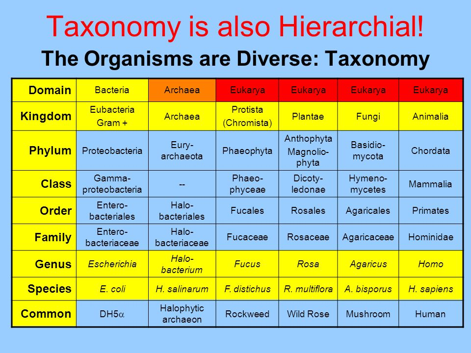 Taxonomy is also Hierarchial!