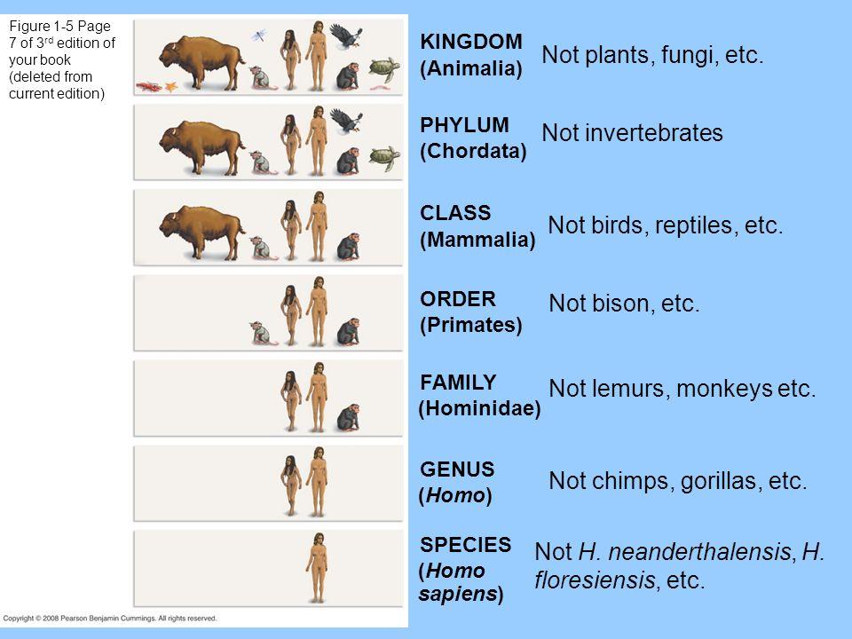 Not chimps, gorillas, etc.