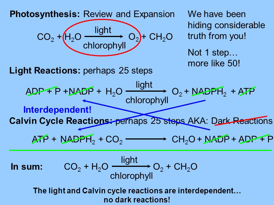 Photosynthesis: Review and Expansion