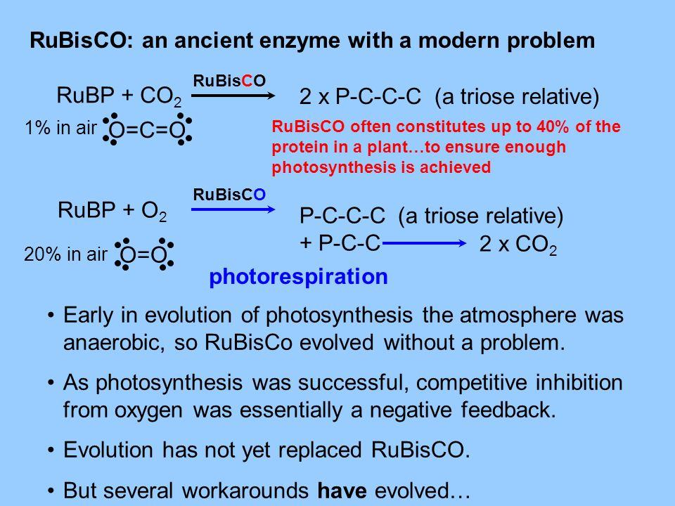 RuBisCO: an ancient enzyme with a modern problem