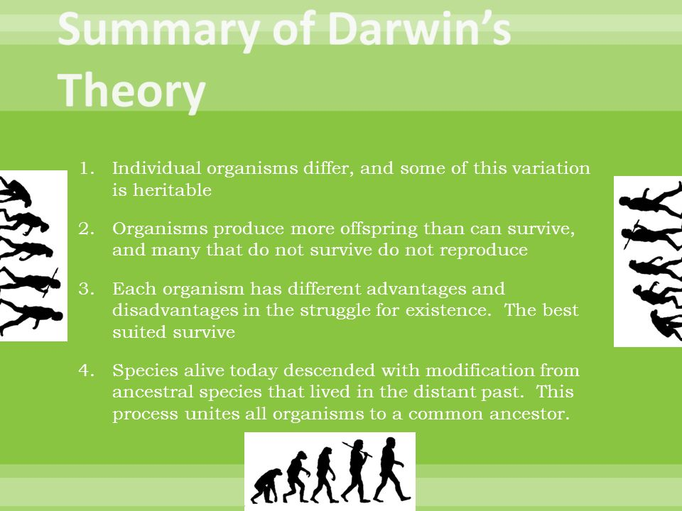 an overview of the theory of evolution This lesson provides high-school students with an introduction to a more detailed study of evolution by focusing on the historical origins of darwin's theory and the ideas that came before.