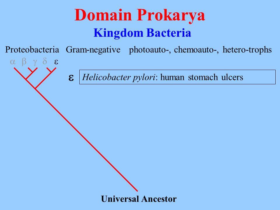 Domain Prokarya Kingdom Bacteria  Proteobacteria Gram-negative