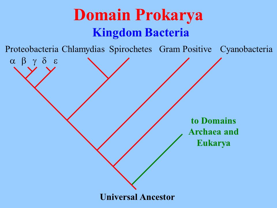 to Domains Archaea and Eukarya