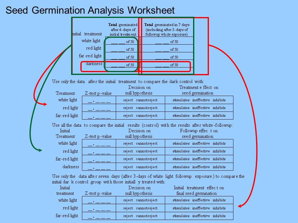 Seed Germination Analysis Worksheet