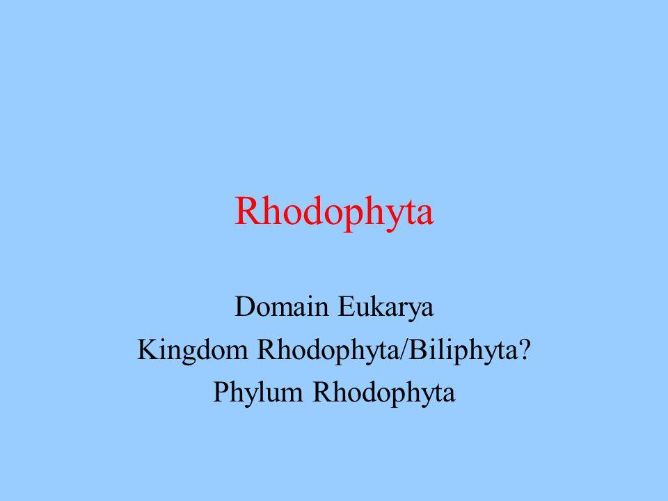 Domain Eukarya Kingdom Rhodophyta/Biliphyta Phylum Rhodophyta