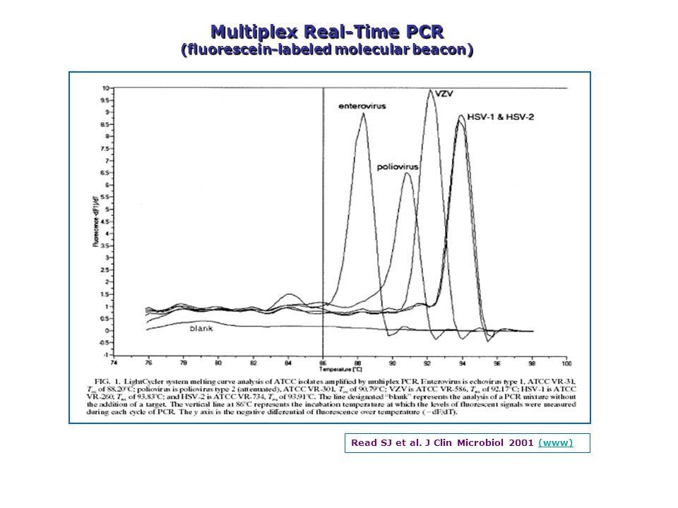 Multiplex Real-Time PCR (fluorescein-labeled molecular beacon)