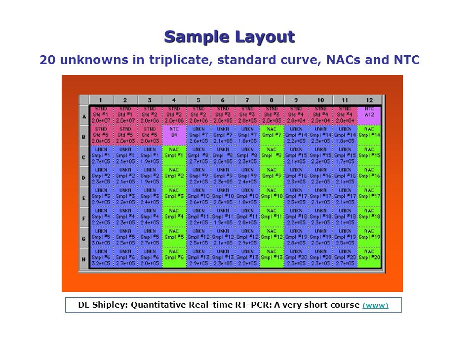 Sample Layout 20 unknowns in triplicate, standard curve, NACs and NTC