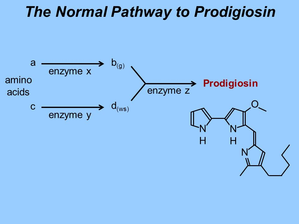 The Normal Pathway to Prodigiosin