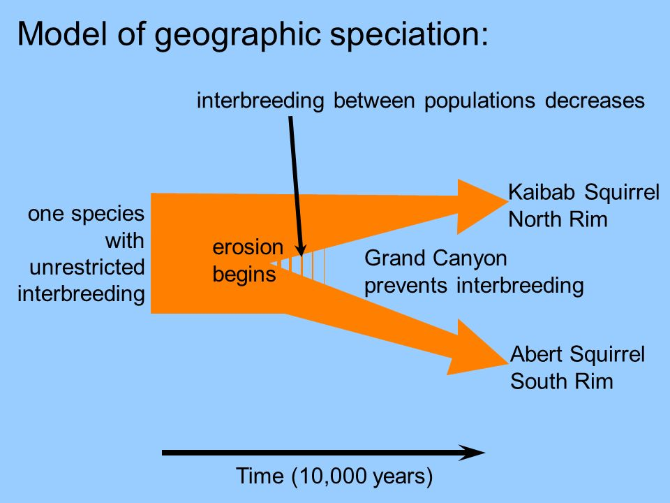 Model of geographic speciation: