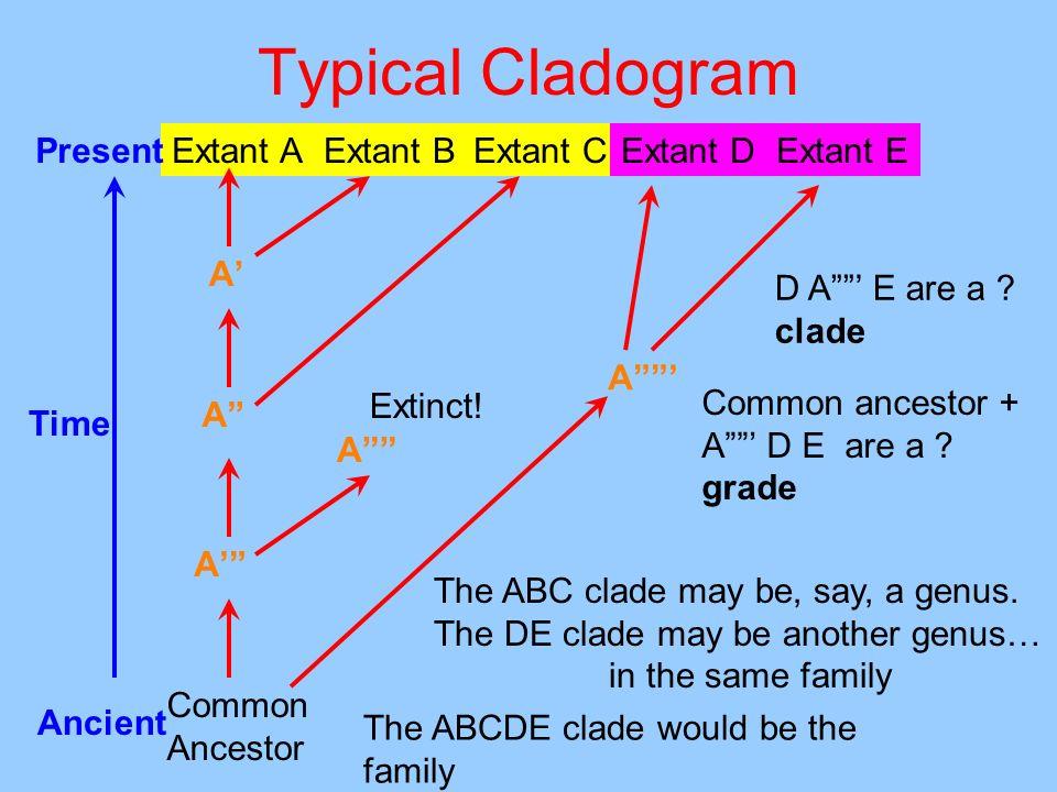 Typical Cladogram Present Extant A Extant C Extant B Extant D Extant E