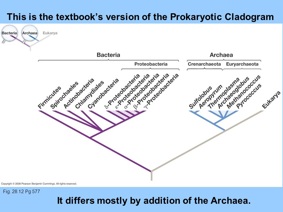 This is the textbook's version of the Prokaryotic Cladogram