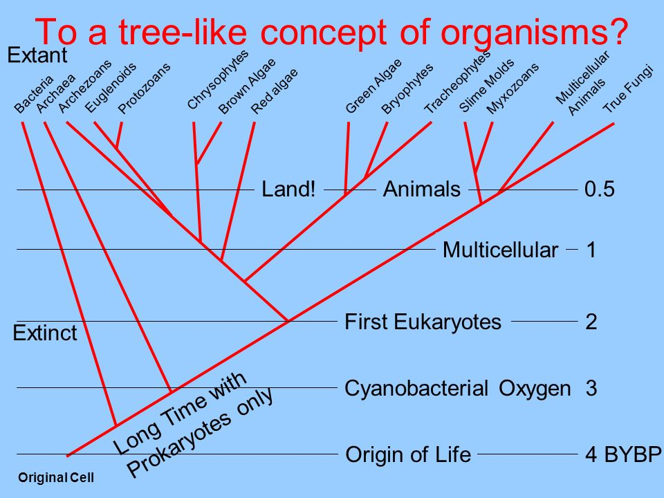To a tree-like concept of organisms