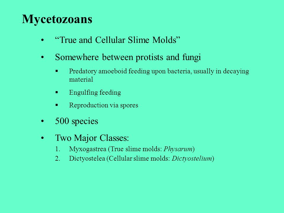 Mycetozoans True and Cellular Slime Molds