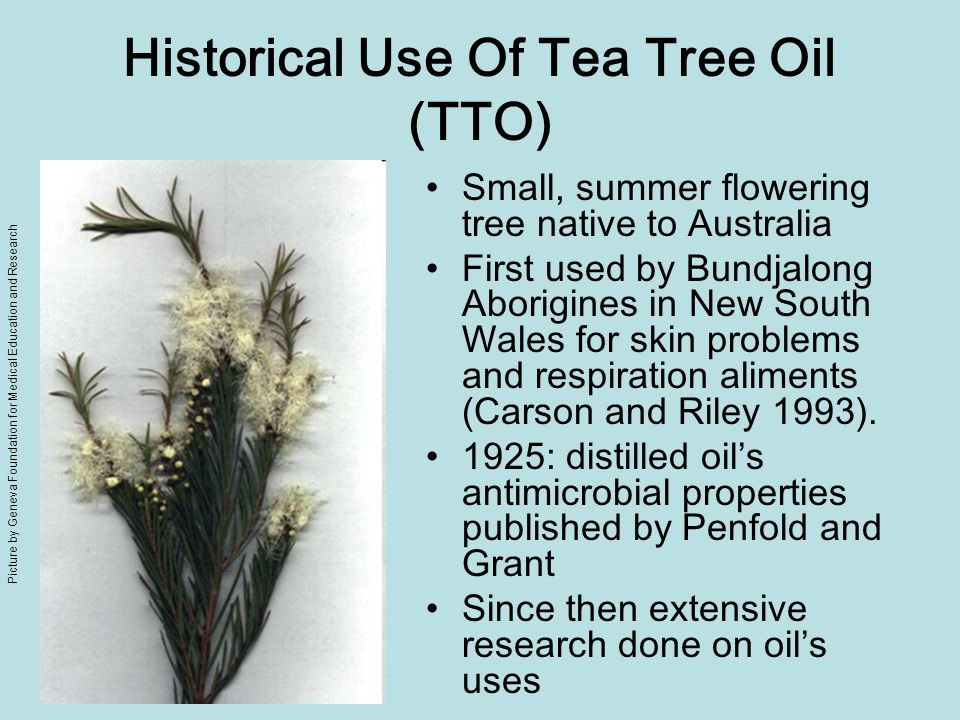 Historical Use Of Tea Tree Oil (TTO)