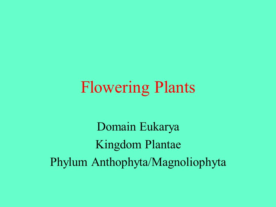 Domain Eukarya Kingdom Plantae Phylum Anthophyta/Magnoliophyta
