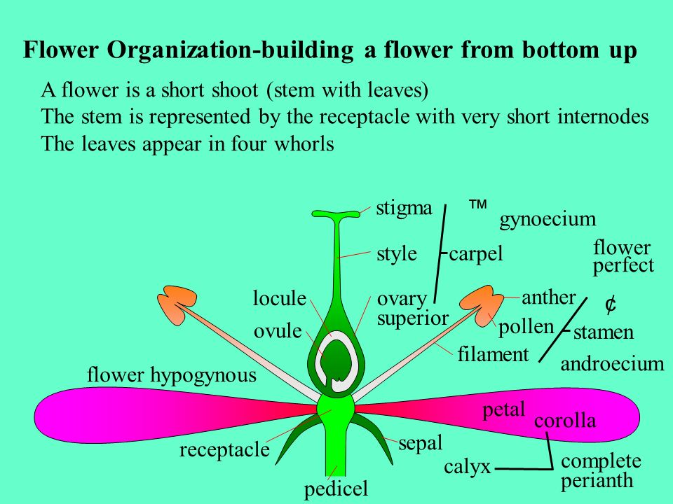 Flower Organization-building a flower from bottom up