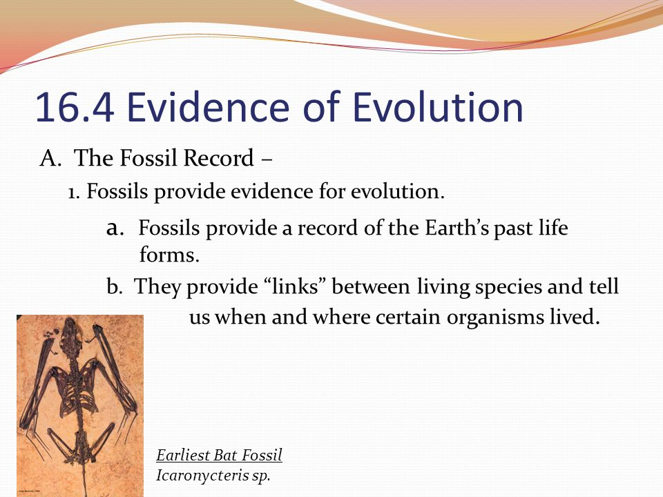 16.4 Evidence of Evolution A. The Fossil Record –