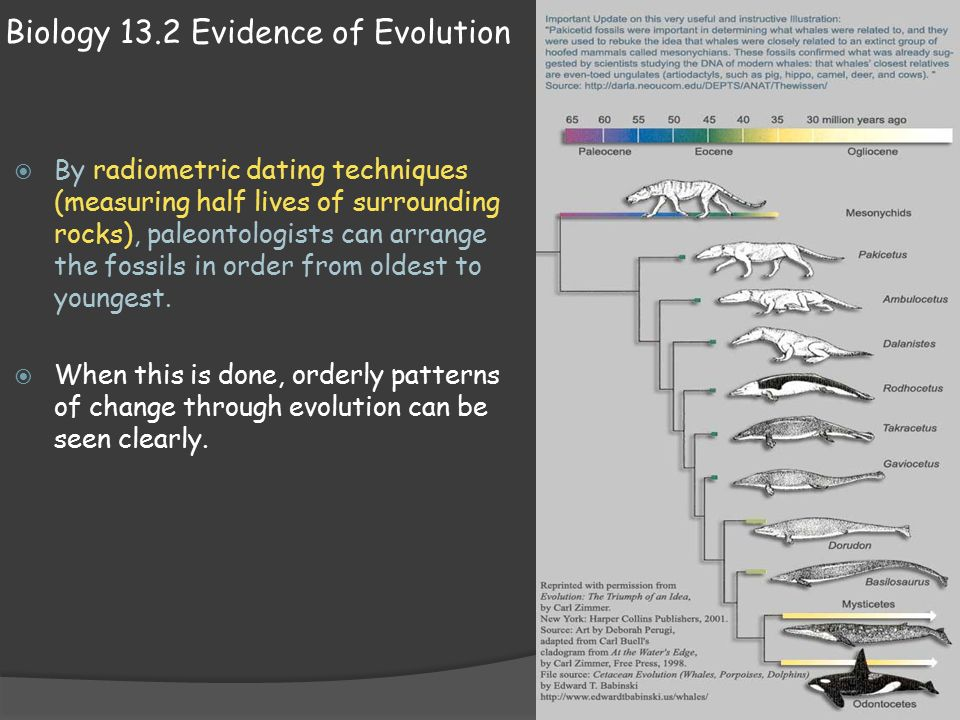 biology evidences of evolution essay Evidence supporting biological evolution  in this collection of essays, the  author clearly explains how structural and functional limitations, phylogeny, and.