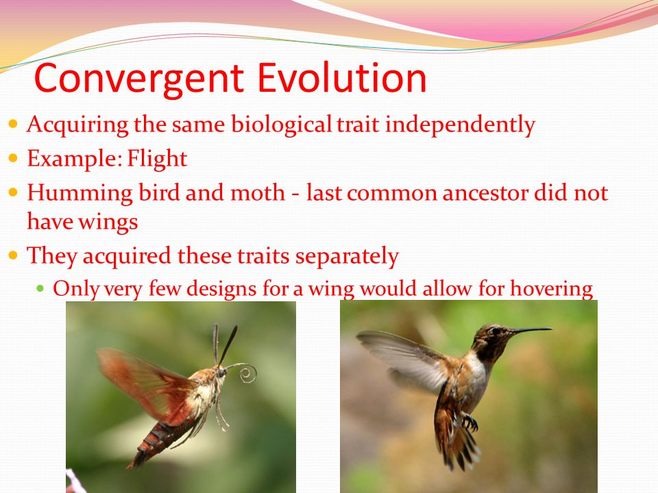 Convergent Evolution Acquiring the same biological trait independently